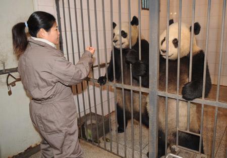 Tuan Tuan & Yuan Yuan am 22. Dez 2008 in Bi Feng Xia