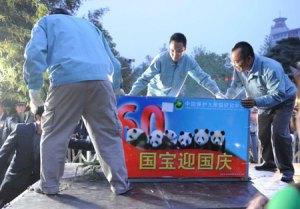 Die PAndas werden von Mitarbeitern des Beijinger Zoos vom LKW geladen, 29. April 2009 (Foto: Xinhua)